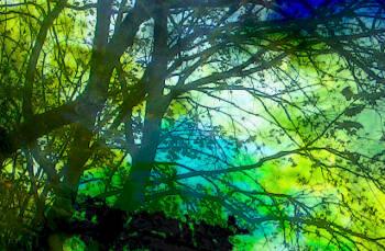Ein undurchdringliches Dickicht in einem Wald.