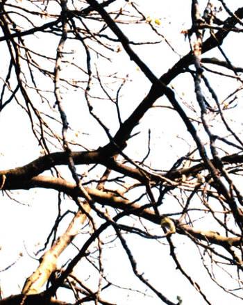 Äste von einem Baum auf dem Hintergrund des Himmels