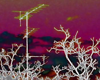 Eine Dachantenne und ein paar Zweige die in den roten Himmel hineinreichen